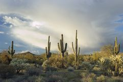 亚利桑那风雨如磐沙漠的sonoran 库存图片