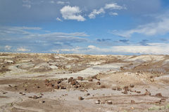 亚利桑那forrest石化 图库摄影
