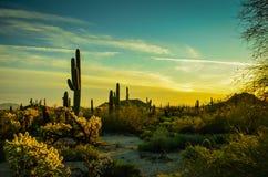 亚利桑那Sonoran沙漠 免版税库存图片