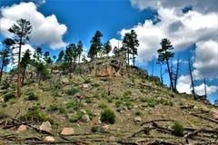 亚帕基Sitgreaves国家森林,亚利桑那,美国 免版税库存照片
