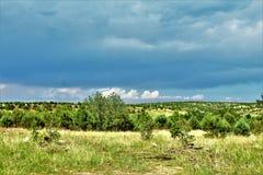 亚帕基Sitgreaves国家森林,美国林业局路51,亚利桑那,美国 免版税库存照片