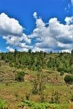 亚帕基Sitgreaves国家森林2002年圈地Chediski火再生物在2018年,亚利桑那,美国 库存照片