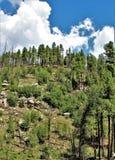 亚帕基Sitgreaves国家森林2002年圈地Chediski火再生物在2018年,亚利桑那,美国 库存图片