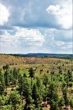 亚帕基Sitgreaves国家森林2002年圈地Chediski火再生物在2018年,亚利桑那,美国 免版税库存照片