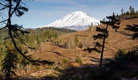 亚当斯森林清楚采伐的深砍土地毁灭砍伐森林 免版税库存照片