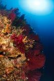 亚得里亚海的四周水中 图库摄影
