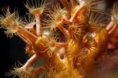 亚得里亚海的宏观水中 免版税库存图片