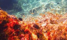 亚得里亚海的水下的看法 免版税库存图片