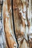 亚斯本木头五谷 库存图片