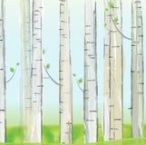 亚斯本森林背景 库存图片