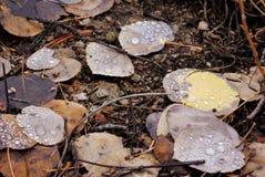 亚斯本秋天雨3 库存图片