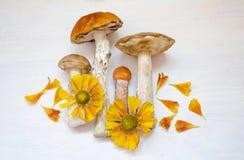 亚斯本蘑菇 在与花的木背景隔绝的橙色盖帽蘑菇 免版税库存照片