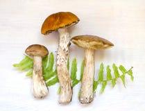 亚斯本蘑菇 在与蕨的木背景隔绝的橙色盖帽蘑菇 免版税库存照片
