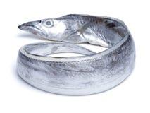 亚洲丝带鱼 免版税库存图片