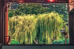 亚洲人从事园艺悉尼市澳大利亚 免版税库存照片