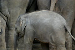 亚洲儿童大象 免版税库存图片