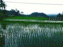 亚洲农业 库存照片
