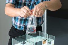 亚洲卖主组装暹罗战斗或betta鱼到出售的透明塑料袋里 库存照片