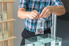亚洲卖主组装暹罗战斗或betta鱼到出售的透明塑料袋里 库存图片