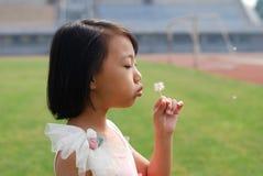 亚洲在域的孩子吹的蒲公英 免版税库存照片
