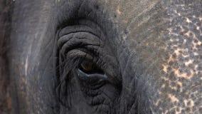 亚洲大象亚洲象属maximus的眼睛 关闭视图 影视素材