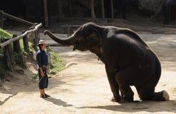 亚洲大象显示 免版税库存照片