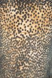 亚洲大象皮肤 免版税库存图片