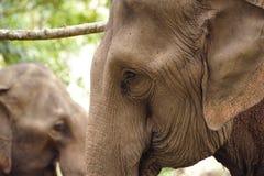 亚洲大象题头 库存照片