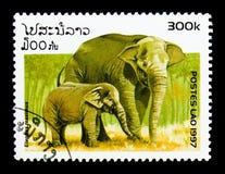 亚洲大象(亚洲象属maximus),大象serie,大约1997年 免版税库存图片