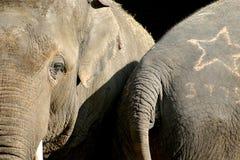 亚洲夫妇大象 库存照片