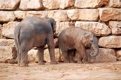亚洲小牛大象他的母亲 免版税图库摄影
