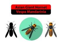 亚洲巨型大黄蜂或大黄蜂类在白色的Mandarinia 皇族释放例证