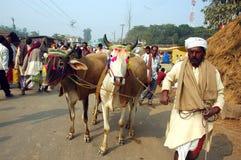 亚洲最大的牛公平的s 免版税库存照片