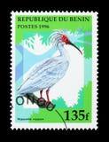 亚洲有顶饰朱鹭(Nipponia日本),鸟serie,大约1996年 图库摄影