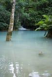 亚洲热带池的游泳 免版税库存照片