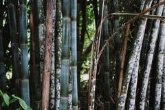 亚洲竹森林自然后面地面概念 免版税库存照片