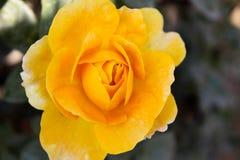 亚洲背景花杏仁奶油饼例证向量空白黄色 库存照片