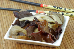 亚洲蘑菇 免版税库存照片