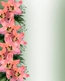 亚洲边界花卉百合粉红色 库存例证