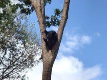 亚洲黑色涉及树 库存图片