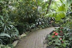 亚热带庭园花木 免版税图库摄影