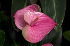 亚热带庭院开花植物 免版税库存照片