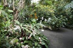亚热带庭院开花植物 免版税库存图片