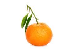 亚热带的果子 免版税库存图片