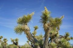 亚瑟B Ripley沙漠森林地国家公园 库存照片
