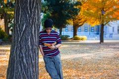 亚裔人在秋天站立在一棵黄色银杏树树下 图库摄影