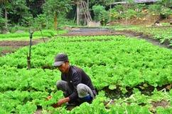 亚裔农夫在工作 免版税库存图片