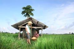 亚裔农夫 免版税库存照片