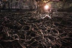 亚裔女孩和轻的球与增长更大一棵大树的根 图库摄影