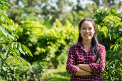 亚裔妇女农夫在龙眼果树园 库存图片
